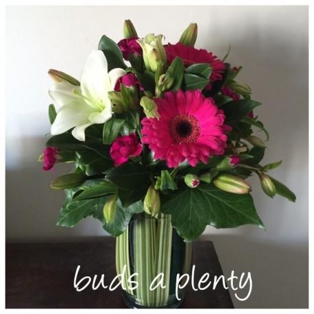 Buds 'a' plenty