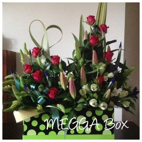 MEGGA box