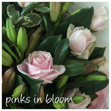 pinks in bloom