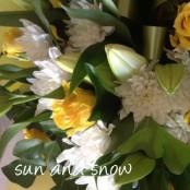 Sun & Snow